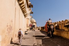 Elephants coming out of Amber Fort