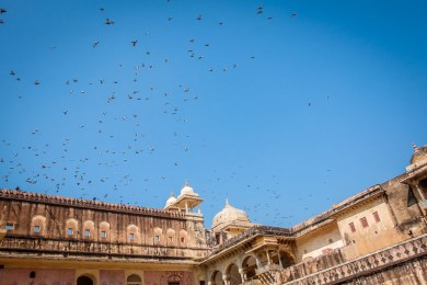 Pigeons circling over the Amber Fort
