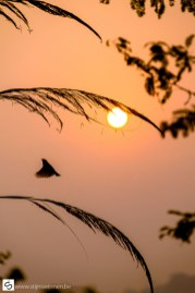 Little bird flying up at sunrise