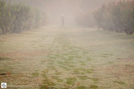 Walking through the fog