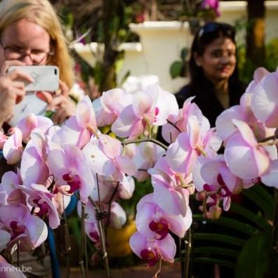Elize enjoying the orchids