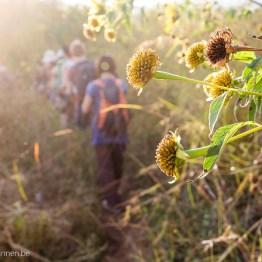 Sunrays in the fields