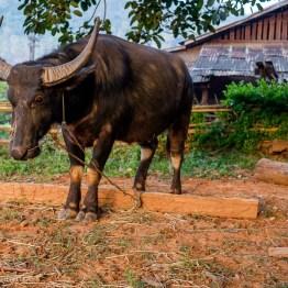 myanmar-hsipaw-trekking-3406