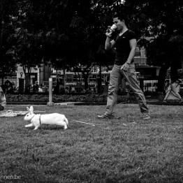Take the rabbit for a walk