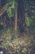 Huge butterfly in the jungle garden