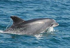 Observação de Golfinhos no Estuário do Sado. Foto: Maria João Fonseca Fonte: ICNB
