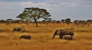 Viagens em África
