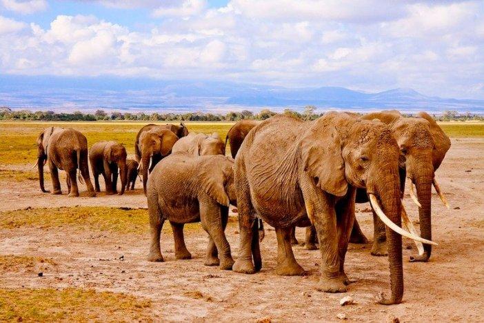 Vida animal no Quénia