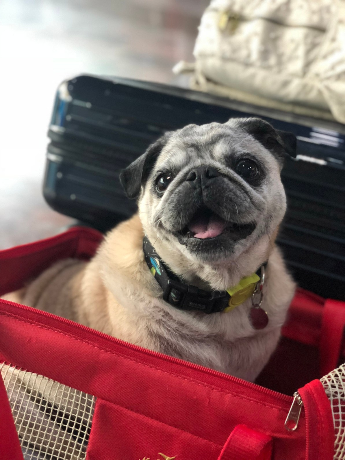 Viajando com Pets - Viagem de avião com pets
