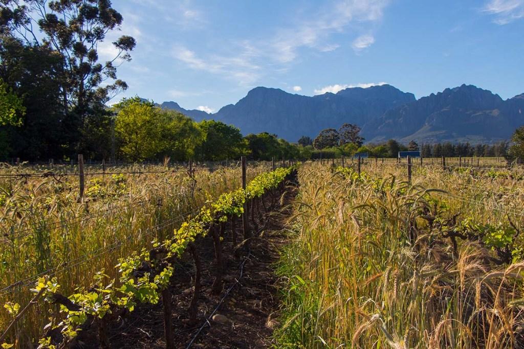 Vinícolas em Cape Town: Nederburg