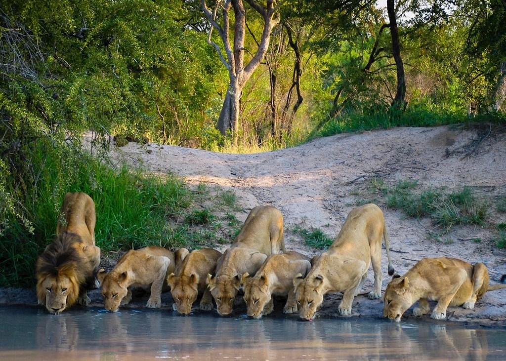 Melhores destinos de safári: Kruger, na África do Sul