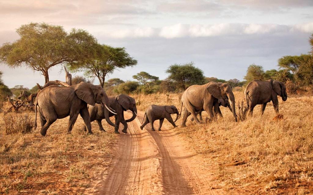Parque Nacional do Serengeti, na Tanzânia