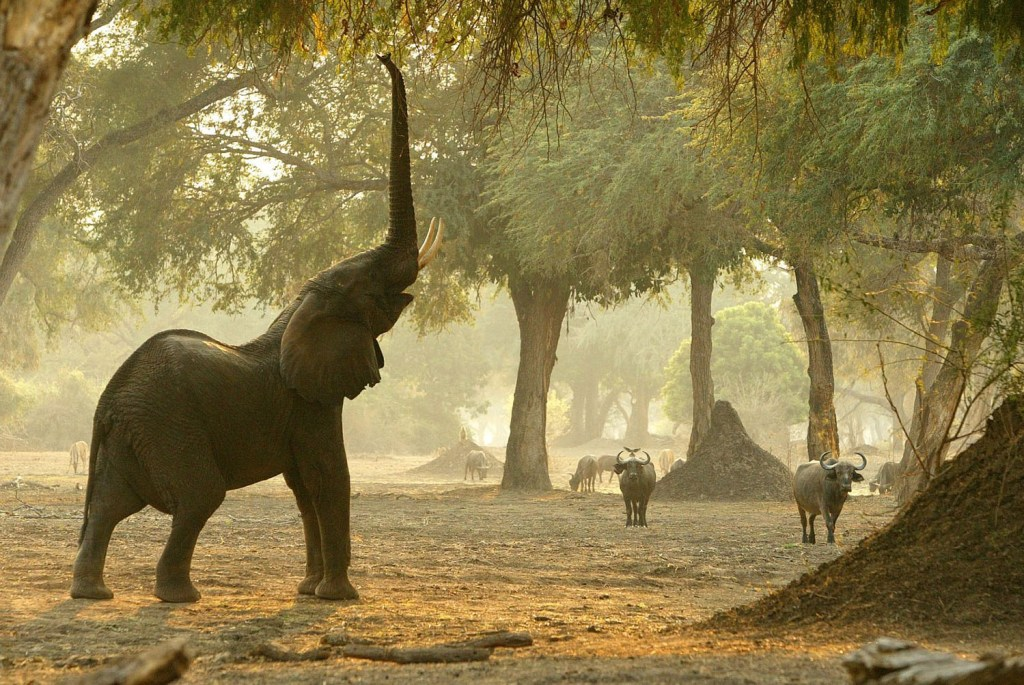 Parque Nacional de Matusadona, no Zimbábue