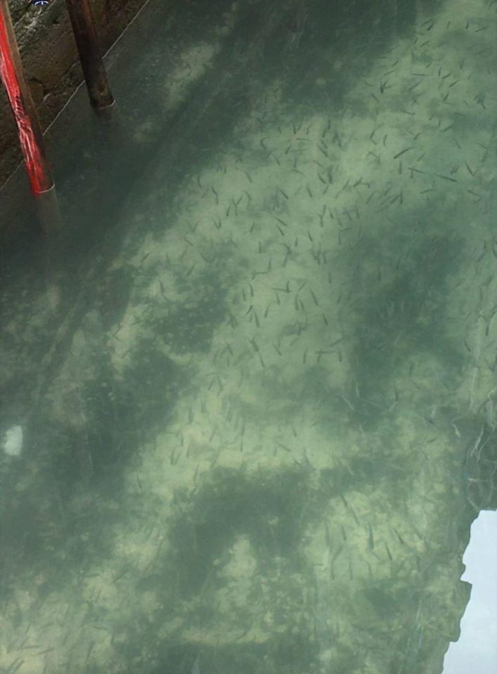Canais de Veneza cristalinos (Foto: Marco Capovilla)