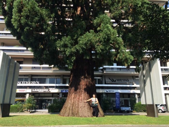 Uma árvore linda em frente à Sotheby´s