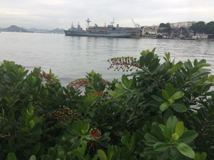 Espécies da nossa fauna margeiam o Museu do Amanhã Rio