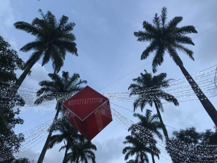 As palmeiras imperiais e o Mineirão em destaque