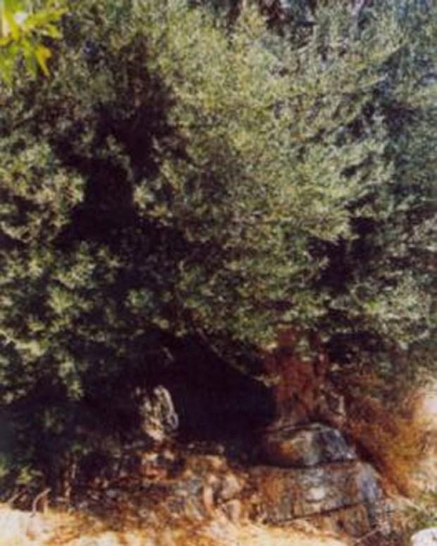 elia-mathainas