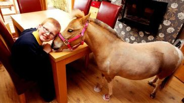 Summer-the-therapy-horse