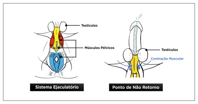 Mecanismo Orgão Masculino - Destruidor de Ejaculação Precoce