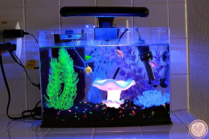 Glofish Tank So You Want To ...