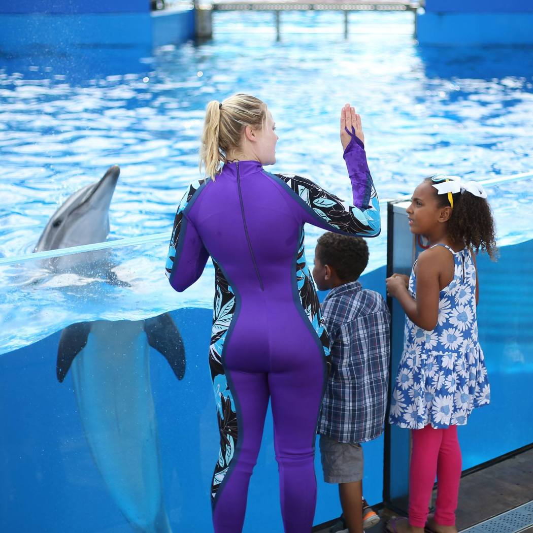 New SeaWorld Changes: Orca Encounter, All Day Orca Play
