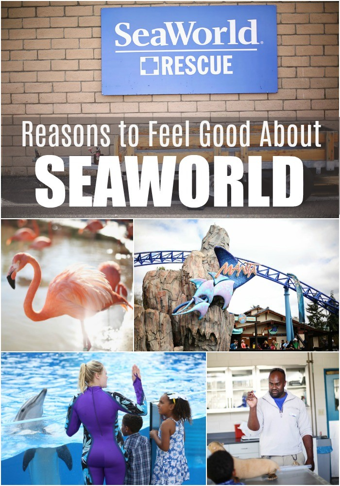 seaworld-changes-multiracial-family-dsm-18