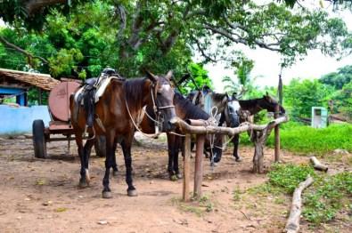 Reiten Kuba Trinidad
