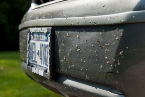 How to remove insects