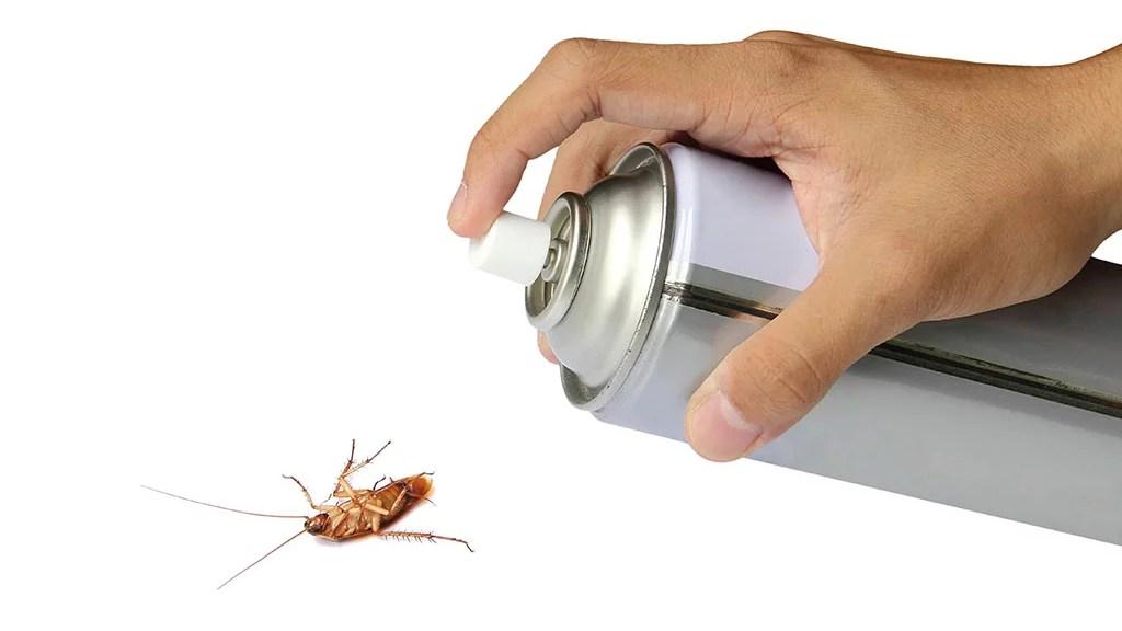 5 tipos de insectos que puedes matar con Biothrine