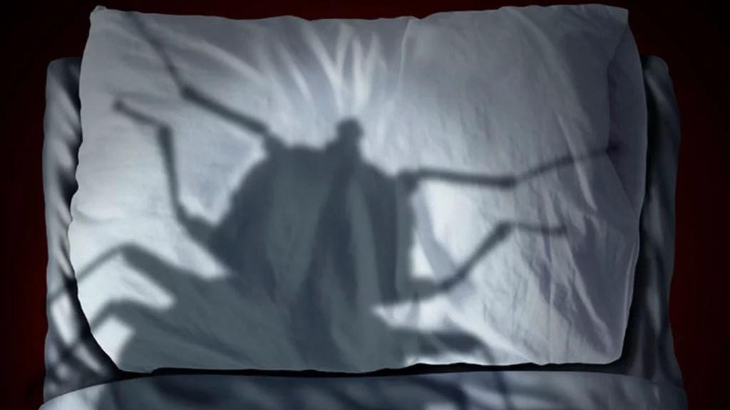 Chinches: el insecto con el que compartes cama