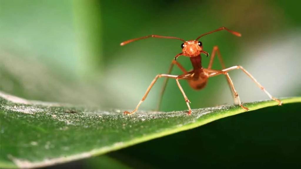 Las 4 hormigas más comunes en México