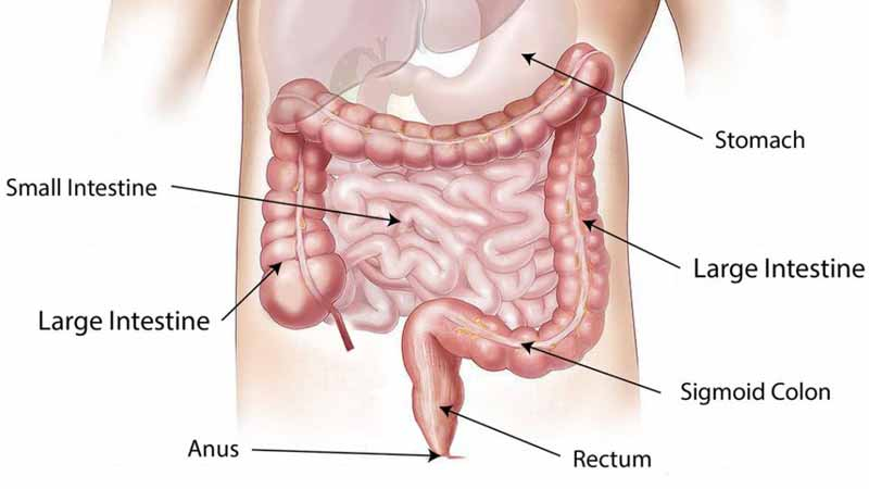 What is colon hydrotherapy treatment - www.detoxandcure.com
