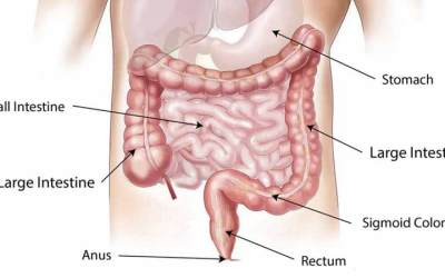 What Is Colon Hydrotherapy Treatment?