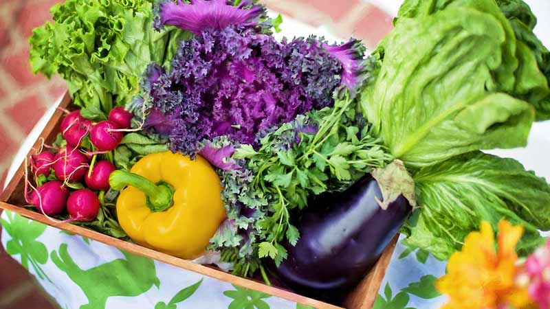 www.detoxandcure.com - Ketosis Diet for Vegans; Is a Vegan Keto Diet Possible
