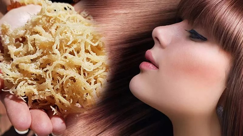 woman with healthy hair Sea-Moss-Benefits-For-Hair-and-Skin-Health-