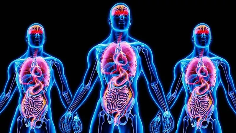 neon human bodies showing organs and muscles highlighted and glowing