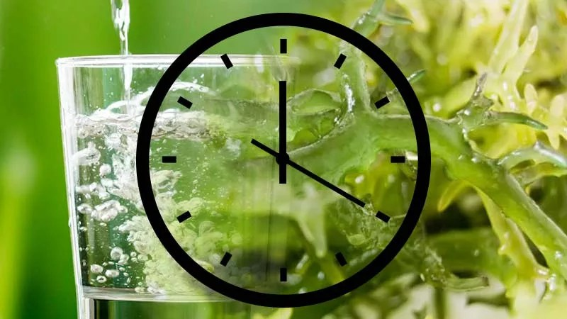 Pro Tips on Doing a Sea Moss Fast - Sea Moss and Water Glass - www.detoxandcure.com