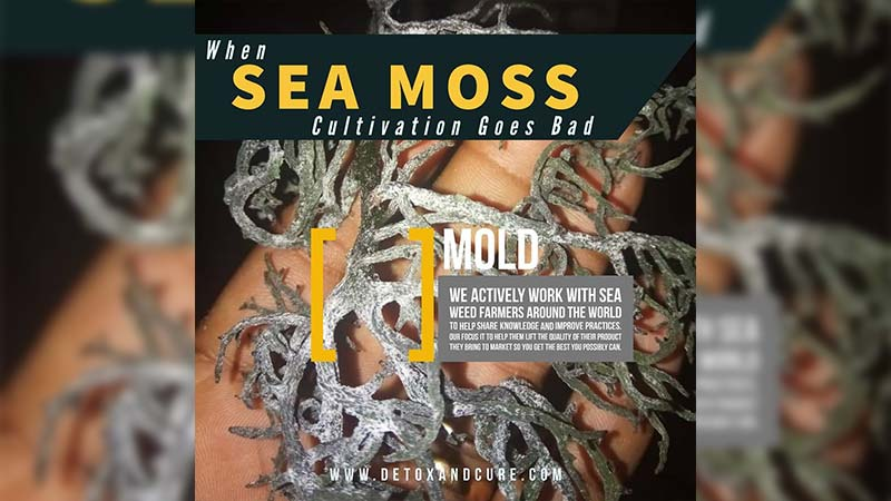 sea-moss-gone-bad-with-mold