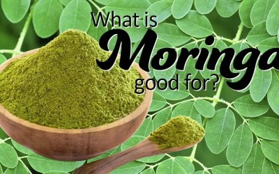 What is Moringa Good For?