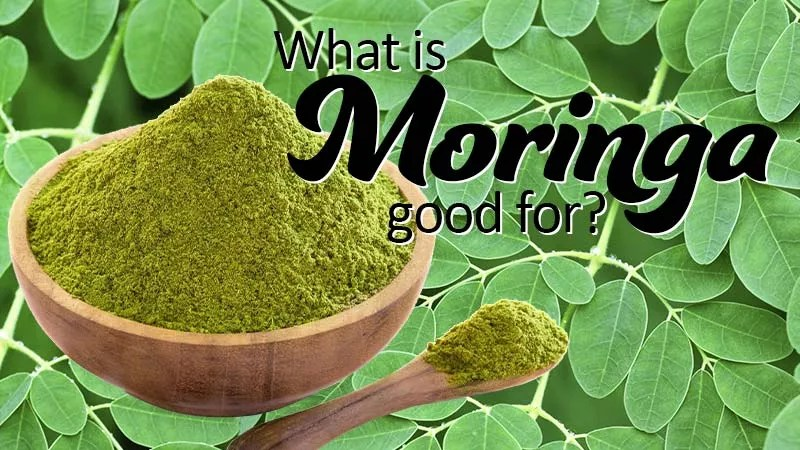 What is Moringa Good For? Image of a timber bowl and serving spoon with rich green powder in the bowl and spoon as scooped out of the bowl overlaid on a photo of live moringa leaves which look similar to a maidenhair fern leaf in their structure and placement.