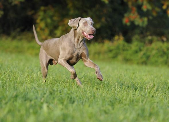 dog protein powder