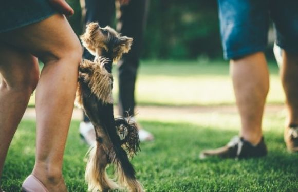 Common Reasons Why Dogs Jump on People