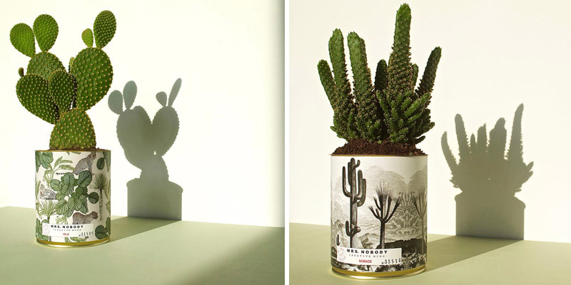 Cactus e piante grasse mrs nobody dettagli home decor for Piante decorative