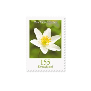 Briefmarke Deutschland Buschwindroeschen