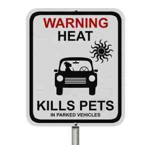 Hund - Hitze- Auto- Tod