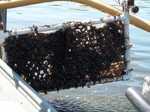 Ammonia reduction lagoon retrofits