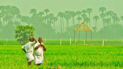 Agri Scientists Suggestions To Telugu Farmers