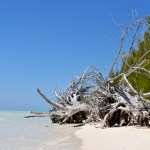 Les incontournables pour un voyage exceptionnel aux Bahamas