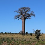 Pourquoi choisir Madagascar pour vos prochaines vacances?